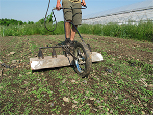 Flame-Weeding the Carrot Bed