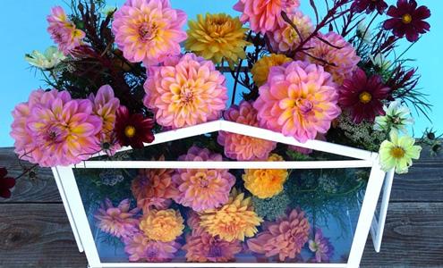 Floral Forecast Webinar