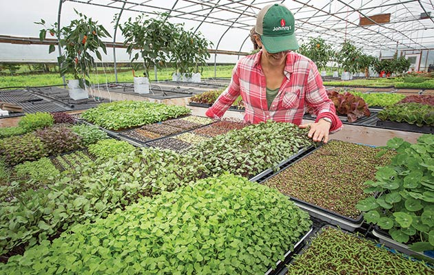 Succession-Planted MicroGreens at Johnny's Trial Greenhouse in Albion, Maine