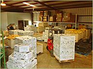 Freshly Packed Farm Produce