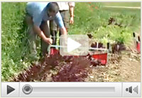 Watch Greens Harvester in Action