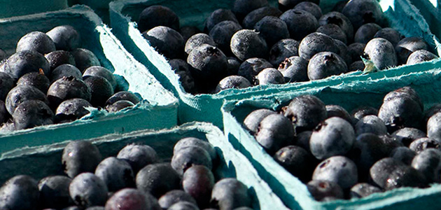 Johnny's Blueberry Harvest Program