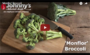 Monflor Standard Broccoli