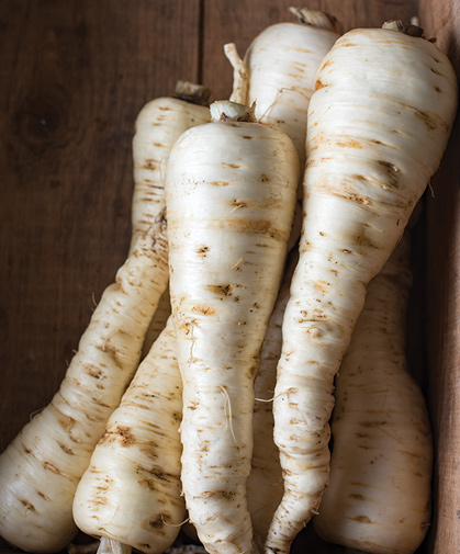 A box of parsnip roots, harvested, cleaned, and ready for storage.