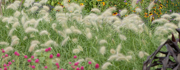 Beyond Blossoms - Ornamental Herbs, Grasses, & Vegetables
