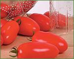 Saladette & Sauce Tomatoes