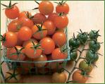 Johnny's Tomato Exclusives