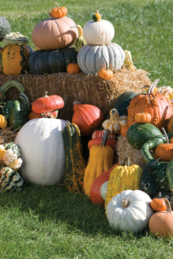Diverse Pumpkins, Gourds & Squash Display