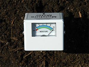 Use a moisture meter to accurately determine soil moisture.