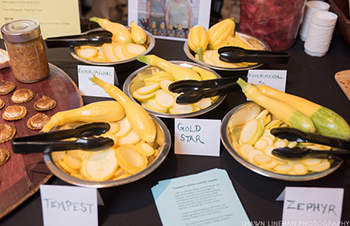 Johnny's-Bred Tempest and Zephyr summer squashes at the CBN Variety Showcase