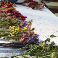A spectrum of dried flowers