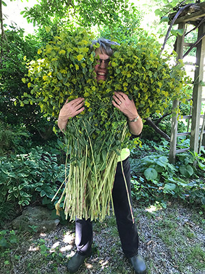 Lisa peeks out from behind a mass of robust bupleurum