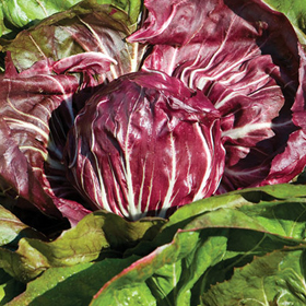 How to Grow Radicchio