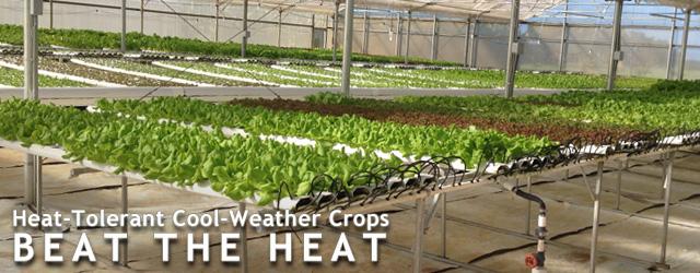 Heat-Tolerant Cool-Weather Crops