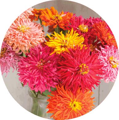 Cactus-Flowered Mix