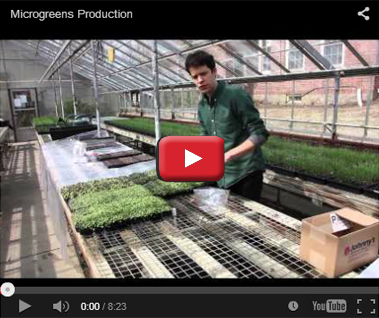 Micro Greens Production & ROI