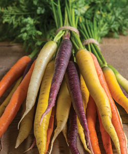 Colored Carrot Bunches