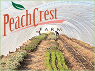 Winter High Tunnels at Peach Crest